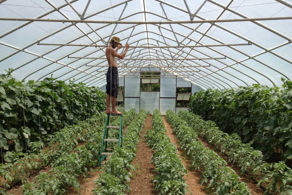 Blue Valley Organic Farm Greenhouse