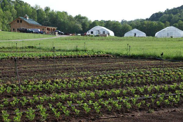 Riverstone Organic Farm