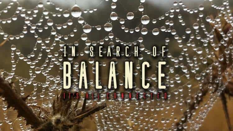 In Search of Balance Film